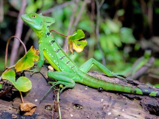 De 5 mooiste natuurparken van Costa Rica